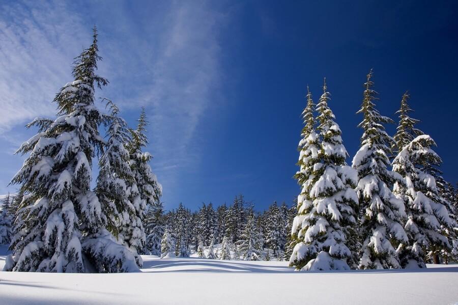 зима,лес,