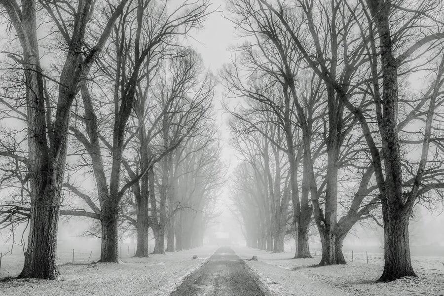 снежная съемка,фотографирование,зима,снег,удивительные кадры,