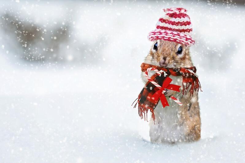 Бурундучок,зима,снег,